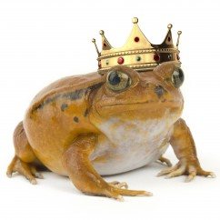 Frog Prince to King, of content.