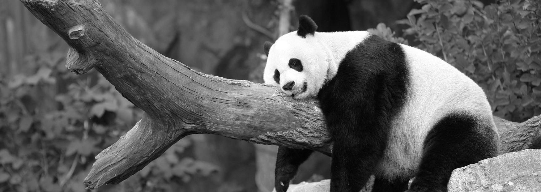 Panda 4.0 – New Algorithm Update