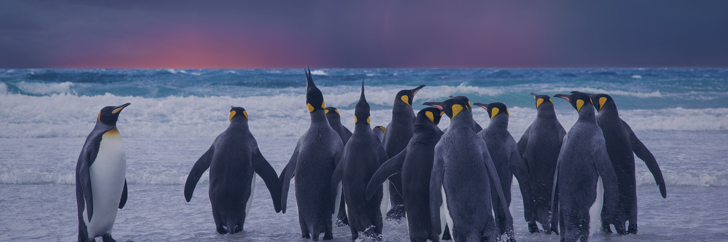Google's Fourth and Final Penguin Update