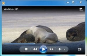 video clip of seals